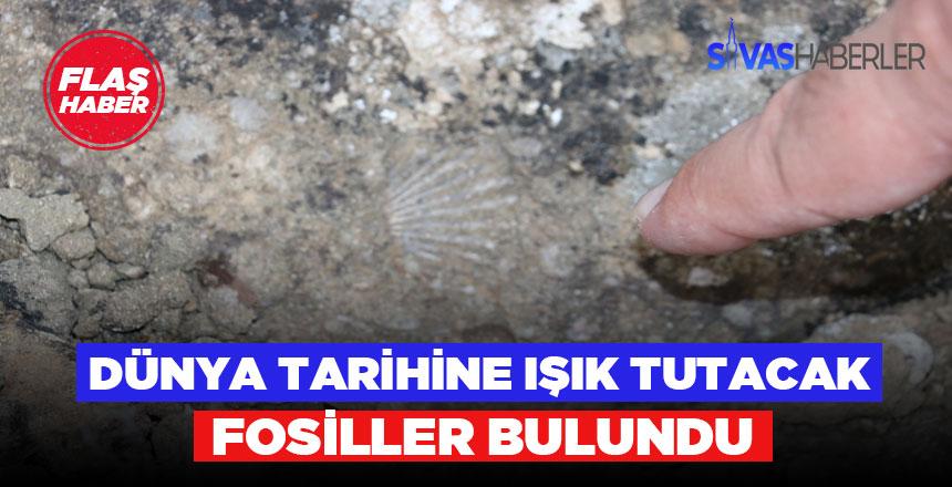 Deniz canlılarına ait fosiller Sivas'ta bulundu