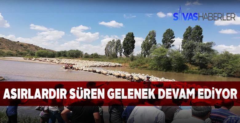 Sivas'ta Koyun yıkama etkinliği ilginç anlara sahne oldu