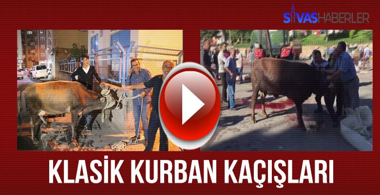 Sivas'ta Klasik Kurban Kaçış Manzaraları