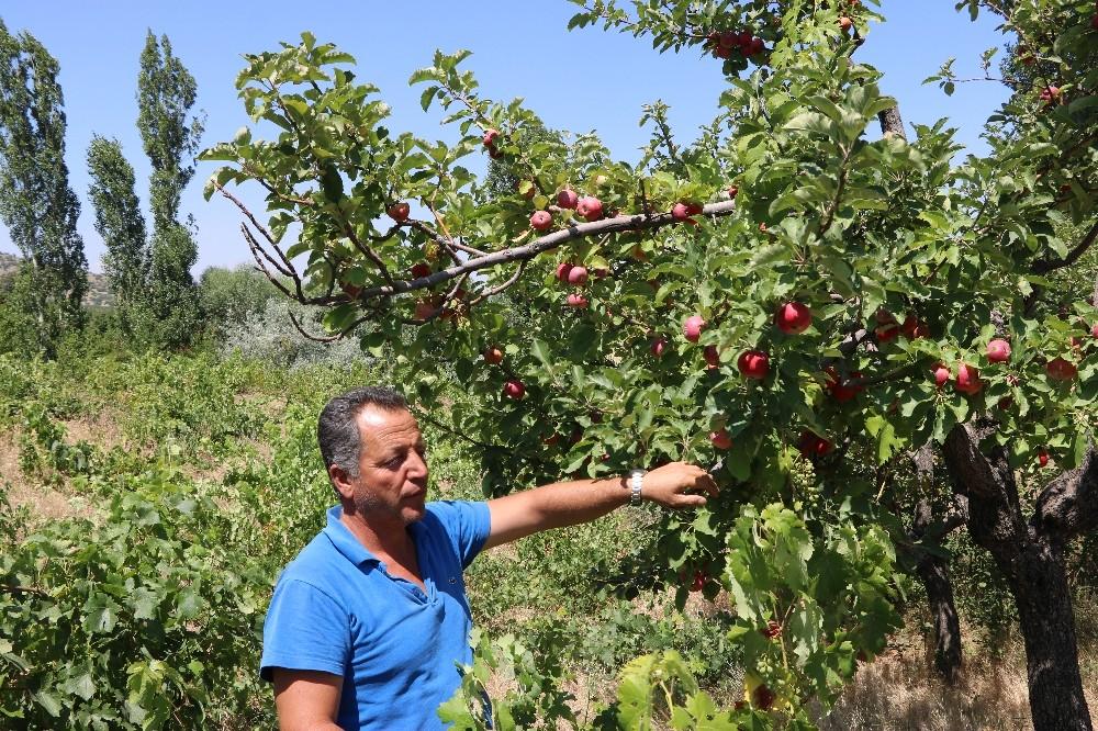 Niğde'de yazlık elma pazarda alıcılarını bekliyor