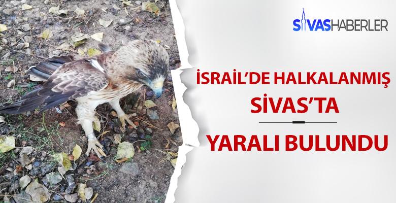 İsrail'den Kalkan Kartal Sivas'ta Bulundu