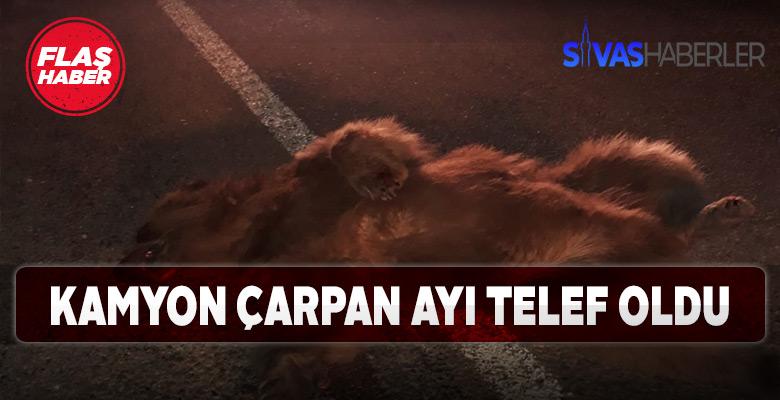 Sivas İmranlı'da karayoluna inen Ayıya kamyon çarptı