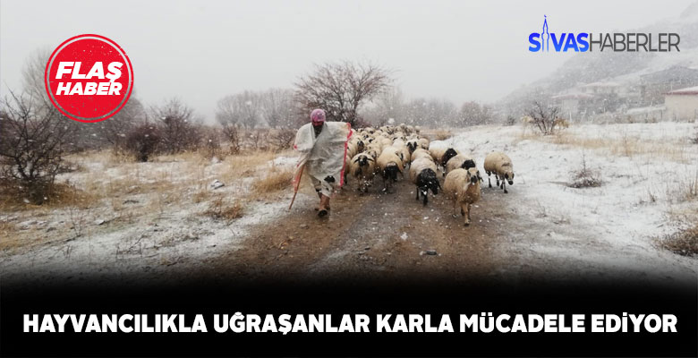 Sivas'ta hayvancılıkla uğraşanlar karla mücadele ediyor