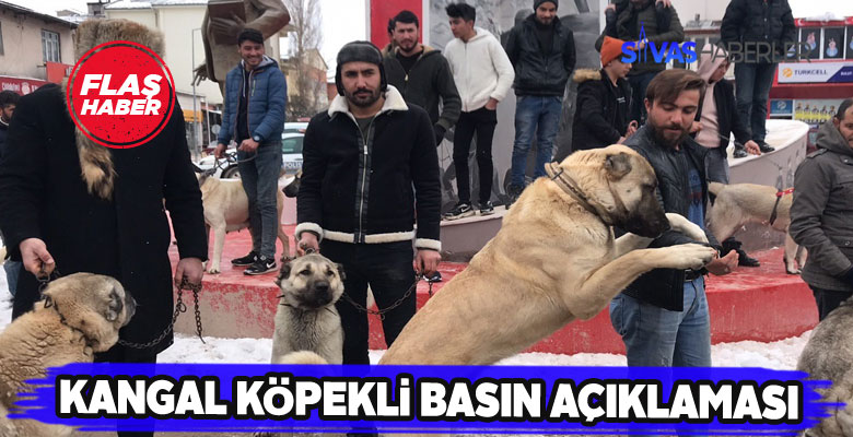 Kangal köpeği yetiştiricilerinden enteresan basın açıklaması