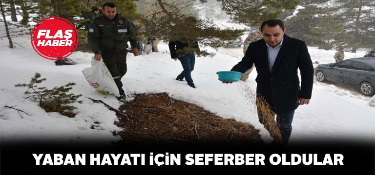 Koyulhisar'da yabani hayvanlar için doğaya yem bırakıldı