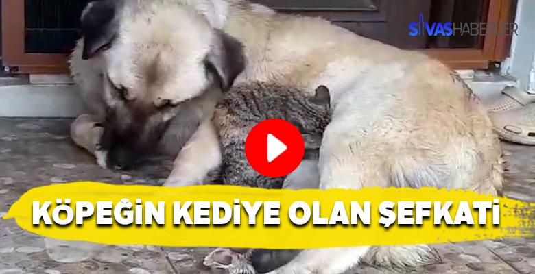 Annesini kaybeden kedi, köpeğe sığındı