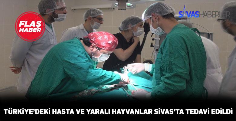 Sivas, hayvanların tedavi merkezi haline geldi