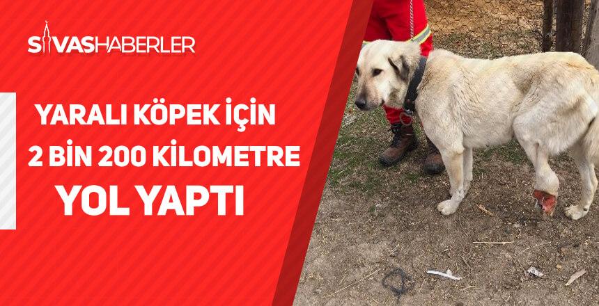 Yaralı köpek için 2 bin 200 kilometre yol yaptı