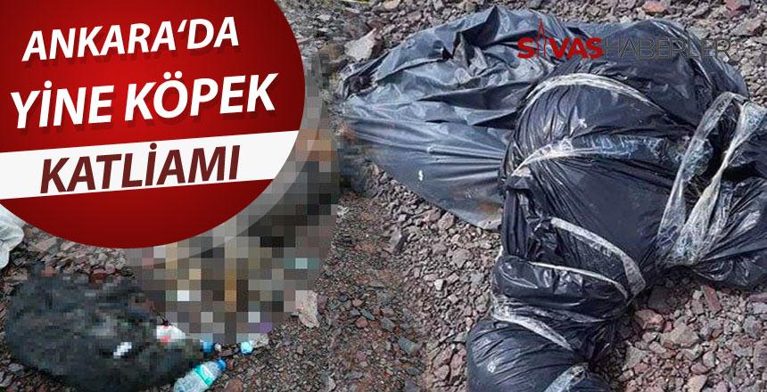 Başkent'te yine köpek katliamı